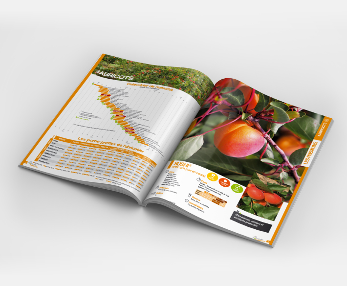 catalogue fruits à noyaux 56 pages